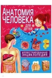 Анатомия человека для детей. Иллюстрированная энциклопедия (МЕЛОВКА)