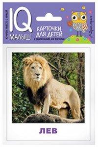 Набор карточек для детей. Животные жарких стран