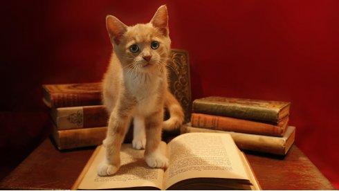 Очаровательные коты!